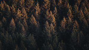 75f8337b69b1bb03854df4a8a4759b8ec7e0fabb trees top view forest 119902 1920x1080